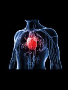 دانستنی مفید در مورد قلب و عروق