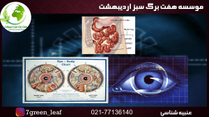 3.mp4 000320436 300x169 - آموزش عنبیه شناسی مقدماتی